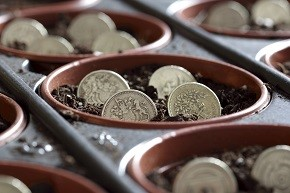 Coins in a plant pot