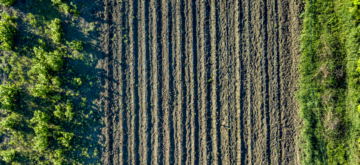 An irrigated field.